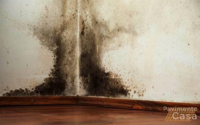 come eliminare la muffa dalle pareti